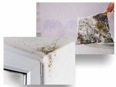 reformas integrales cocinas & baños les corts Barcelona innovalini #Moho en paredes debajo de papel resolver moho profesional de moho eliminar moho quitar moho coo quitar moho consejo para eliminar moho